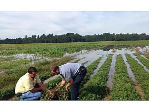 Αρνητικές επιδράσεις της βροχής στις καλλιέργειες
