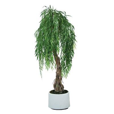 Φυτό ιτιά κλαίουσα 12lt