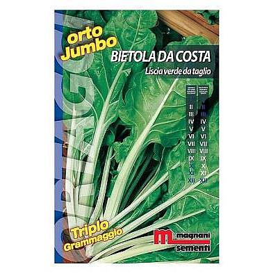 Σπόροι σέσκουλο 500gr (Liscia verde da taglio)